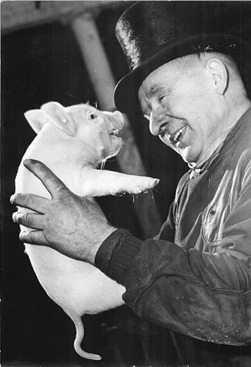 A pig at a German New Year event, 1965.