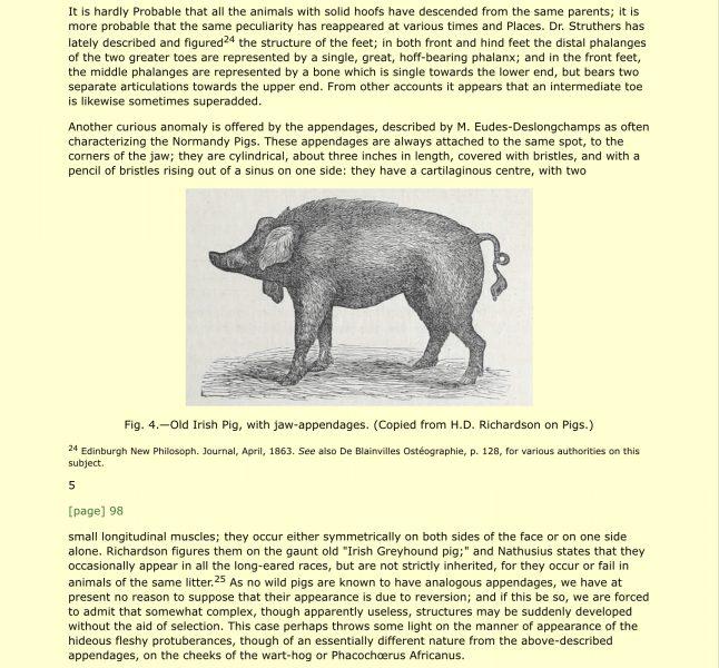 Charles Darwin and the Irish pig wattles