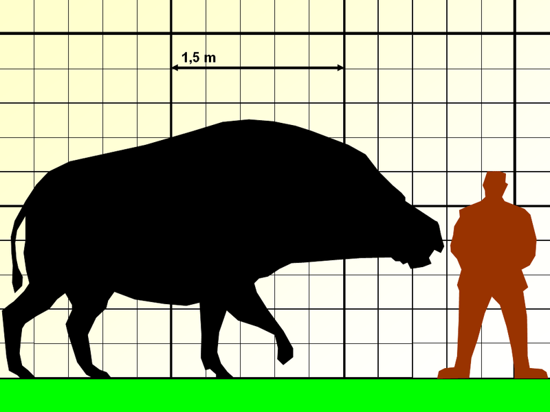 Comparison with human